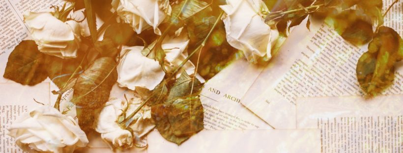 Faded white roses laying on loose pages from books